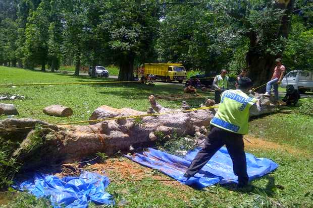 Insiden Pohon Tumbang di Kebun Raya Bogor Tewaskan 4 Orang