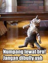 Meme Kucing Numpang Lewat, Kocak Bikin Ngakak