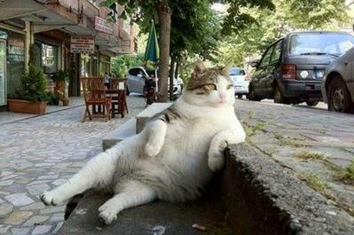 Gambar Kocak, DP BBM, Path, kucing lucu, kucing imut, meme kocak, meme konyol, kumpulan meme, meme bokep, porn meme, memek meme, meme ngentot, comment facebook yang lucu, bikin ngakak, gambar koplak, Blackberry Messenger, WhatsApp, Twitter, Instagram